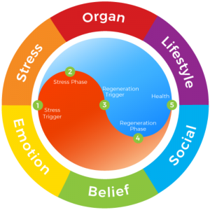 The six root causes to physical symptoms are: Organ, Stress, Emotion, Belief, Social and Lifestyle.